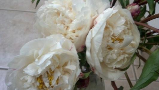 Wedding White Peony Flowers