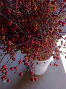 Tall Rose Hips Available for Fall Events.