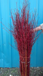 11.22.20 Red Dogwood Branches, Yellow Sticks