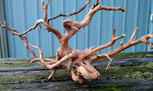 Spider Wood, Spider Roots for aquariums & reptiles