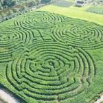 kilchis river corn maze and pumpkin patch