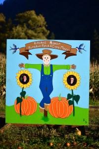 pumpkin patch-5