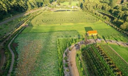 10.24.19 Kilchis River Pumpkin Patch & Corn Maze