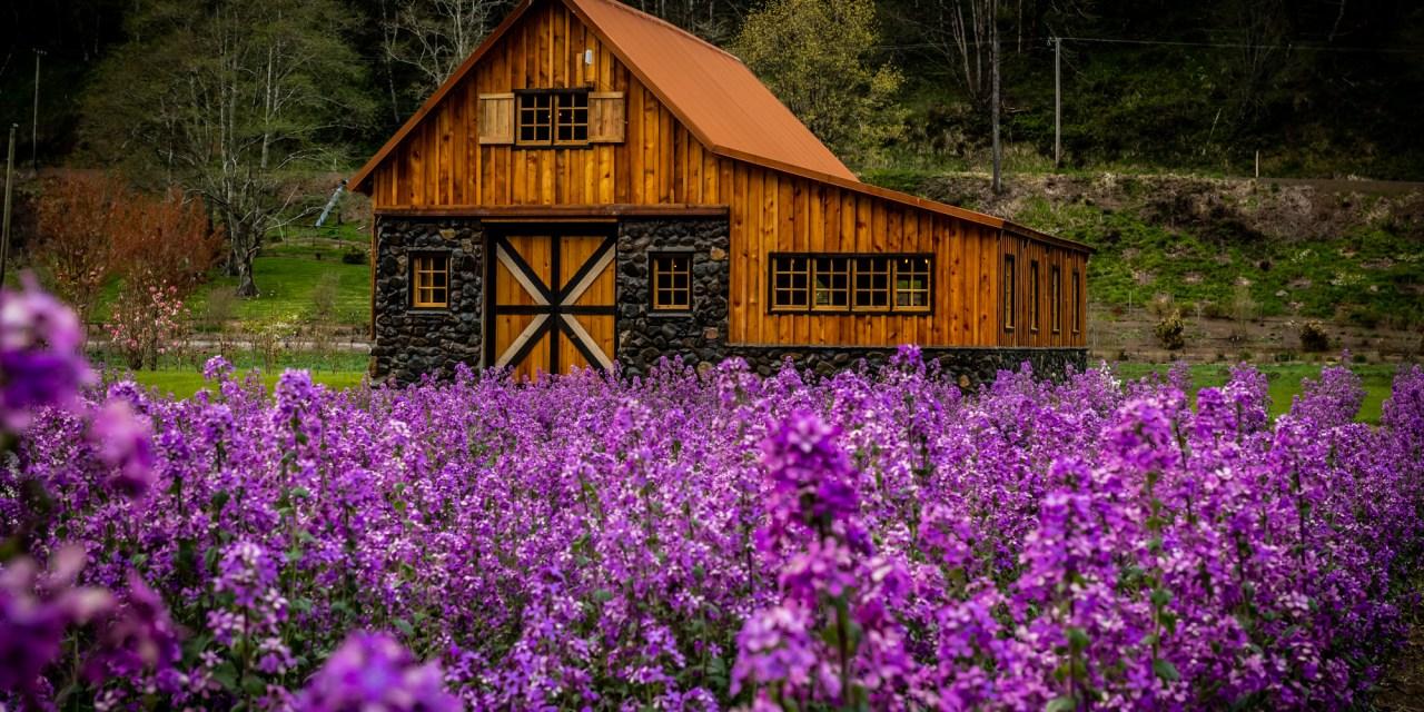 Oregon Coastal Flowers Return Policy