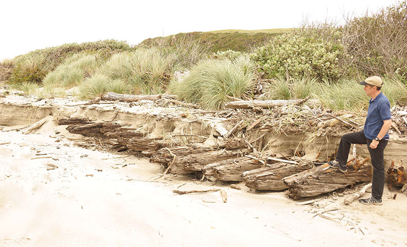 A visitor views the remains of the massive keel ribs of the 1924 shipwreck Acme on the beach near Bandon Dunes Golf Resort;