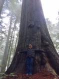 First Big Tree Oregon Redwoods Trail