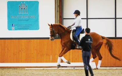 Dressage and Equine Resources to Beat the Boredom