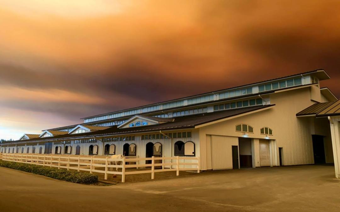 Resources for Caring for Horses Exposed to Wildfire Smoke