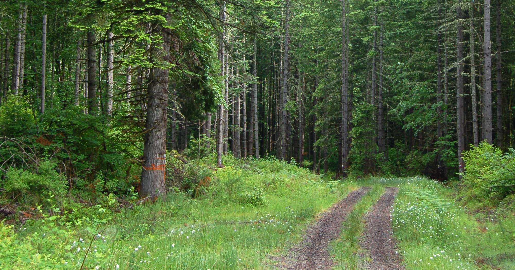 Types Of Forests Worksheet