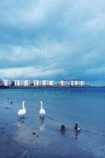 Svanemølle Strand