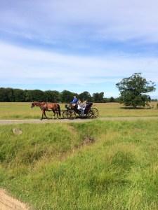 Summertime in Copenhagen - 10 must do's   Oregon Girl Around the World
