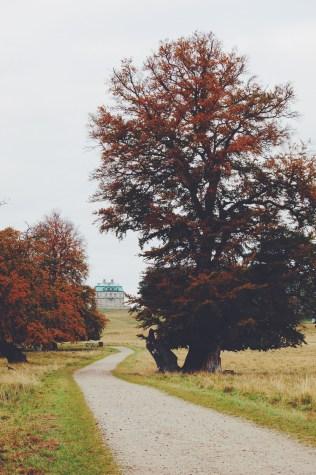 Dyrehaven Park perfect in Fall, Klampenborg Denmark