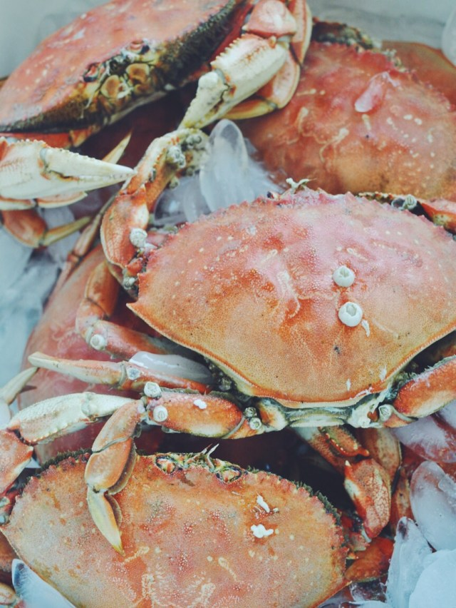Crabbing on the Central Oregon Coast   Waldport, OR USA   Oregon Girl Around the World