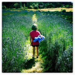 San Juan Island Lavender Farm