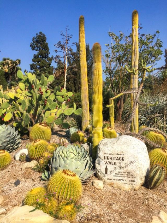 huntington-cactus-gardens-9106