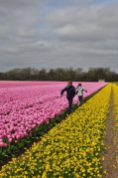 | Tulip time || 3 ways to feel the bloom in the Netherlands | Oregon Girl Around the World