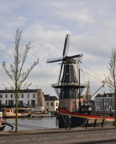 Tulip time | 3 ways to feel the bloom in the Netherlands | Oregon Girl Around the World