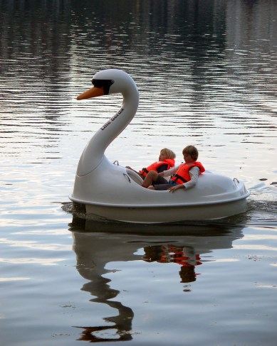 Swan Paddle Boat Nørrebro | Sustainable Summmer Fun in Copenhagen | Oregon Girl Around the World