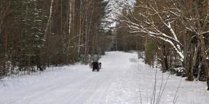 Responsible Husky Dog Sledding outside Riga Latvia