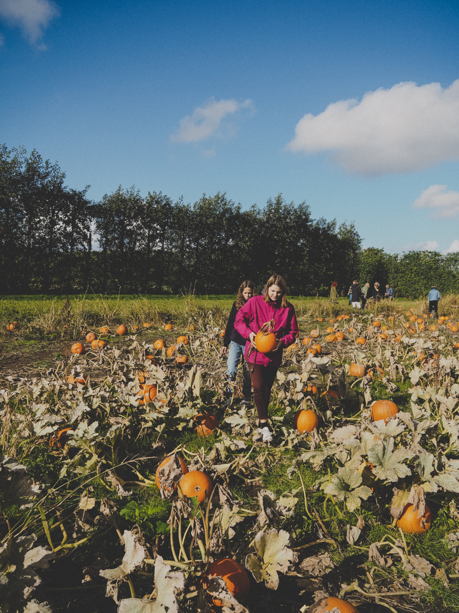 Carve a New Autumn Ritual in Copenhagen at the Pumpkin Patch | Kildebrønde Frugtplantage in Greve Denmark