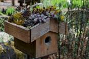 How to Grow a Birdhouse