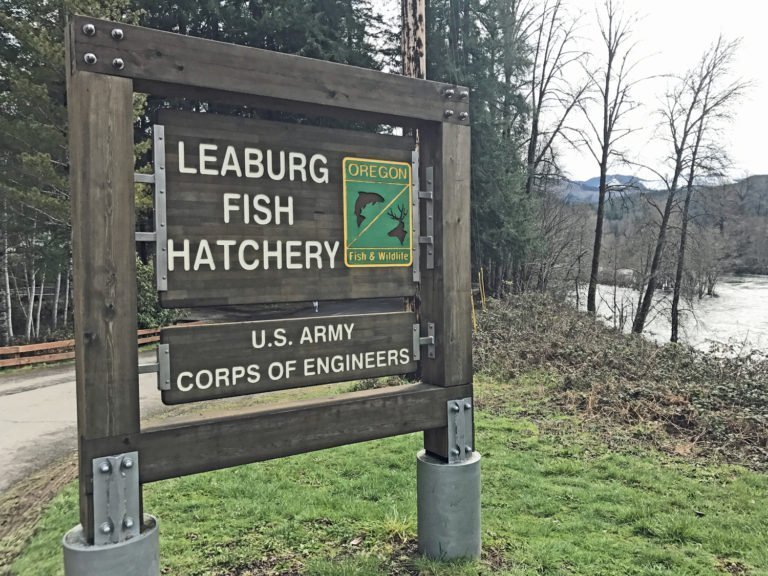 Leaburg Fish Hatchery