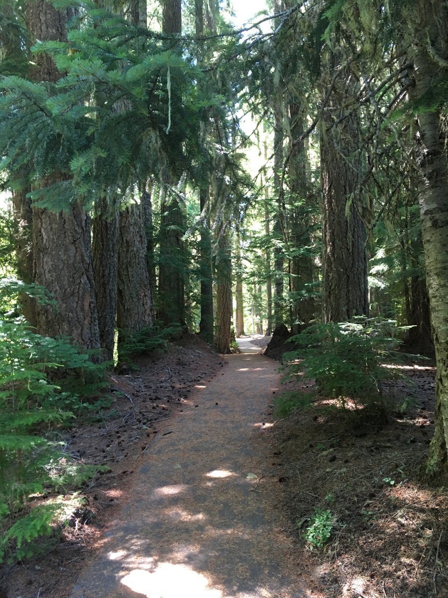 Towering trees line a trail at Salt Creek Falls