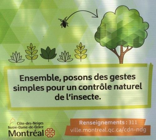 «Posons des gestes», dit la Ville de Montréal