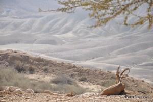 Midreshet Ben-GurionNovember 6, 2009
