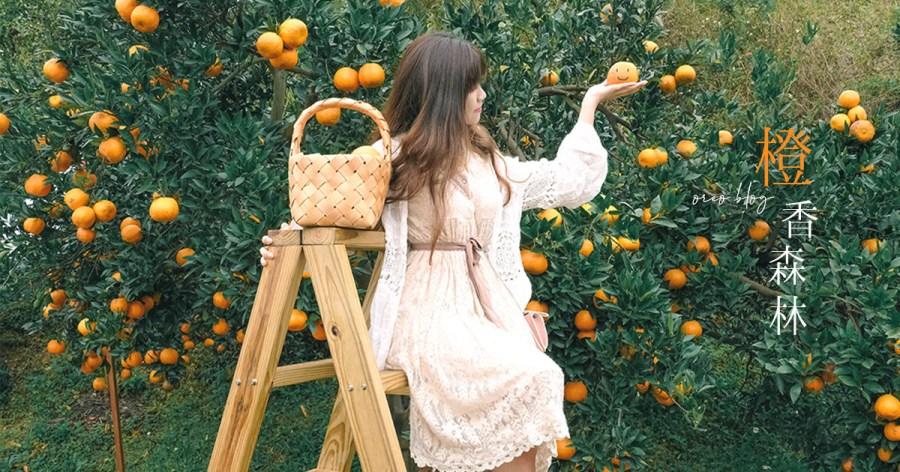 苗栗打卡景點|人氣橙香森林~滿滿的橘子背景溫暖又舒心~門票可抵消費~