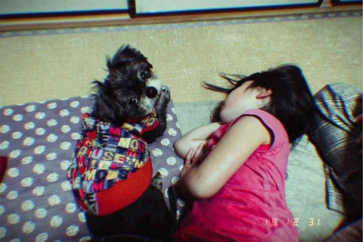 愛犬と子供の写真