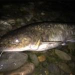 【保存版】これから都市河川でナマズ釣りをはじめたい人へ