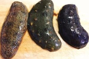 三種類のナマコ