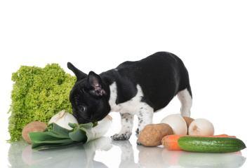 Todos nuestros piensos naturales contienen verduras