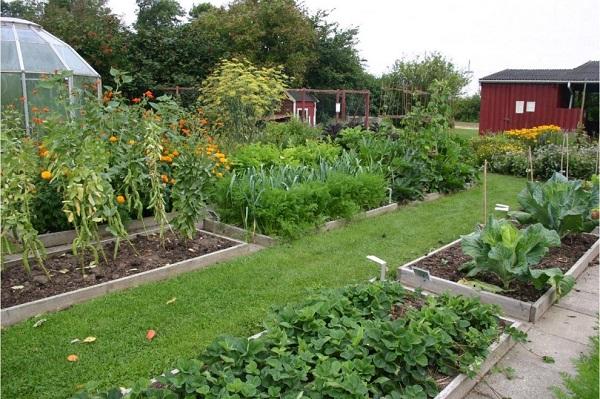 Grow pest free garden 7
