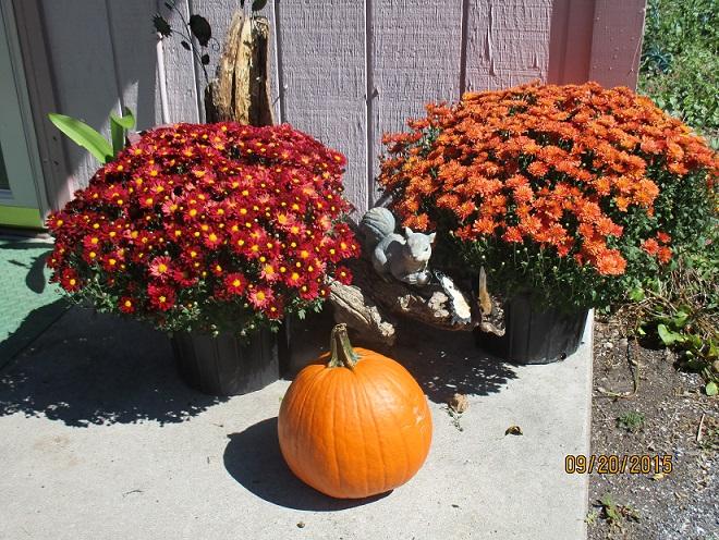 My Autumn Mums & Pumpkins