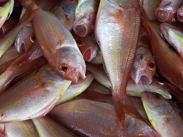 eye health fish