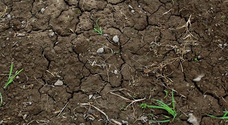 dried soil 1