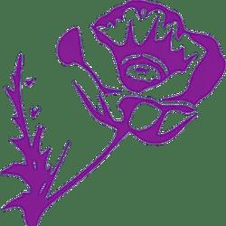 Papaver Somniferum POPPY | Organical Botanicals