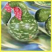 Speckled Swan Gooseneck Gourd seed