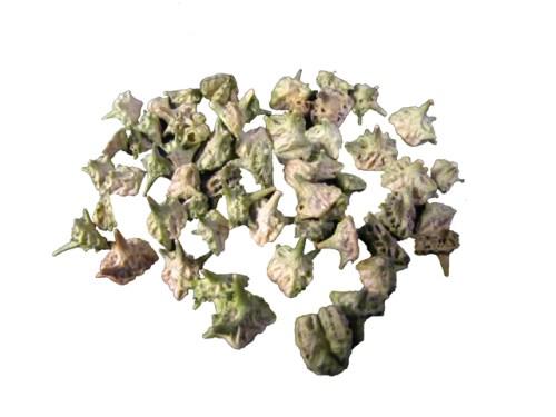 Bai Ji Li - Organic Chinese Herbs