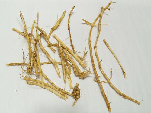 Bai Mao Gen (Chao) Organic Chinese Herbs