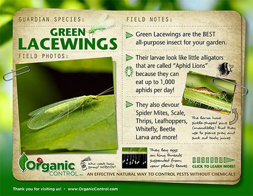 Green Lacewings - Organic Control, Inc