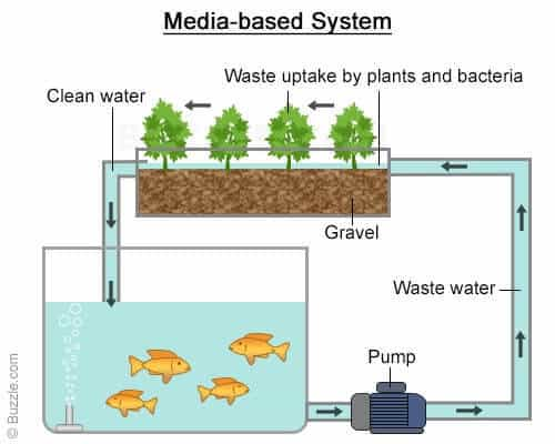 WHAT IS AQUAPONICS? – Illuminum Greenhouses™ Kenya