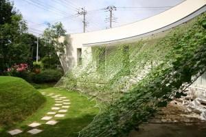 0710緑のカーテン01