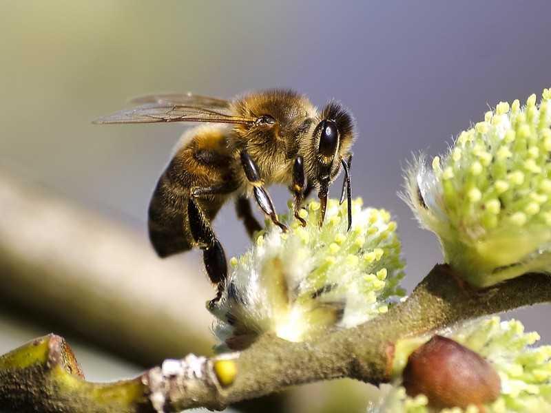 Что такое подмор пчёл?