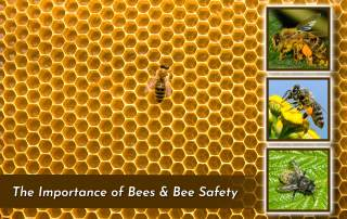 photo of lone bee on honeycomb with three square images of other pollinating bees on plants