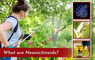 photo of woman gardener spraying pesticides on a pink rose bush with three square images of garden pests and caution sign