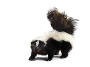 Mommy Skunk