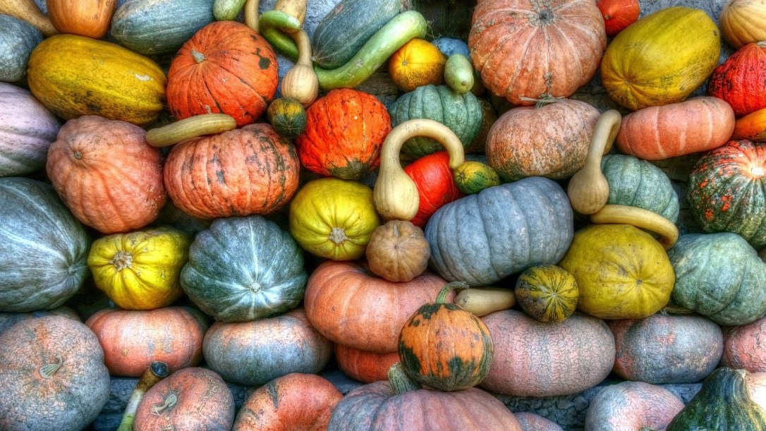 green-orange-and-yellow-pumpkins-157310